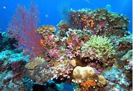 Palau Coral Colors